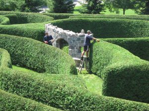 georgina garden centre hedge trims